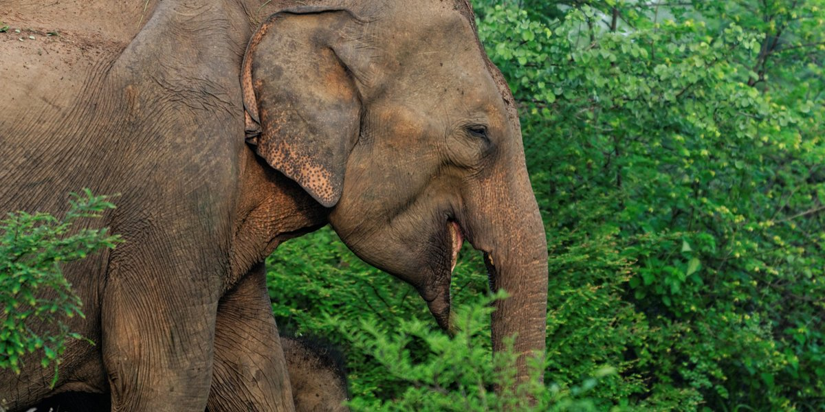 Great news from #ITBBerlin, @RiksjaTravel have signed elephant-friendly pledge to stop selling cruel rides and shows https://t.co/6mtKlj9S0o