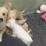 A furry family of five! Dog mommy reunites with pups in heartwarming video: https://t.co/CfLiBY0JMd https://t.co/HaBib3IQ9d