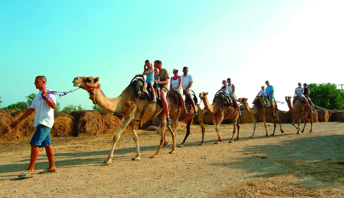 Camel ride anyone? #VisitCyprus #holidays #camel #action #Cyprus https://t.co/XVSAWWm08A