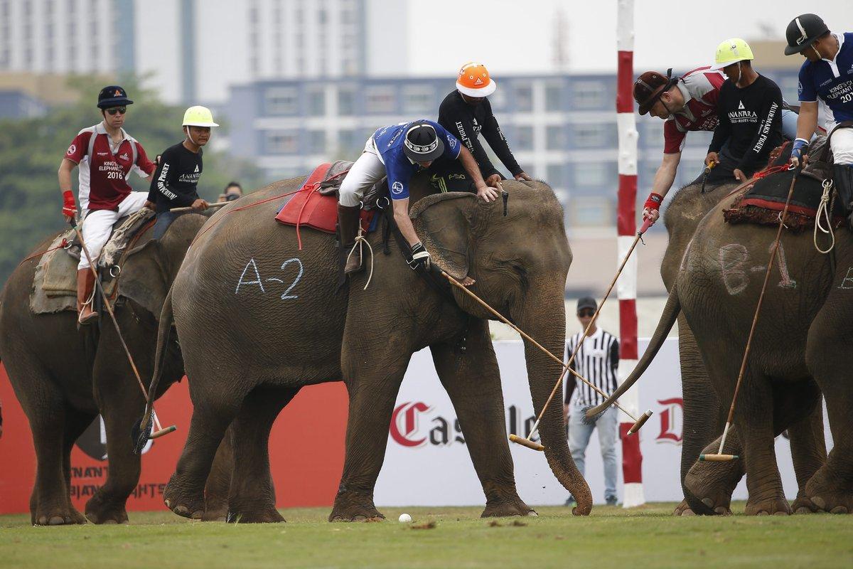Juegan al polo con elefantes rescatados del abandono