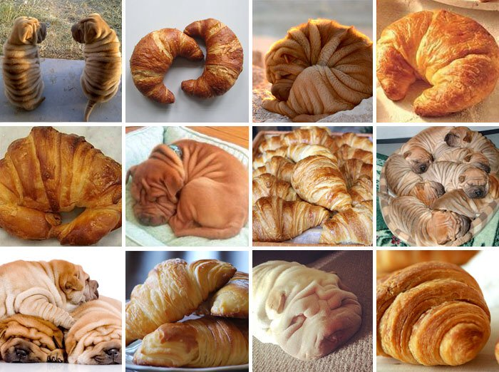 After puppy or bagel and chihuahua or muffin comes this...#lovethem #sharpei or #croissant https://t.co/jV0agm6NzV