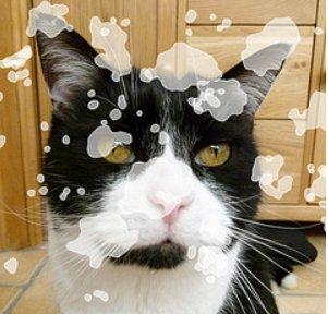 @SantasCat @NancyCakeFace @ZobyDoby1 @Emma_black_cat @The_Tardis_Toms Awwww you got me! https://t.co/z2NUZ3IGV1