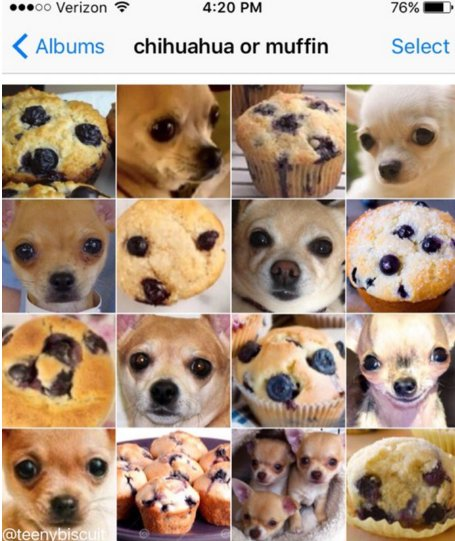 Chihuahua Or Muffin Puppy Bagel Sloth Pain Au Chocolat Donald Trump Raw Chicken