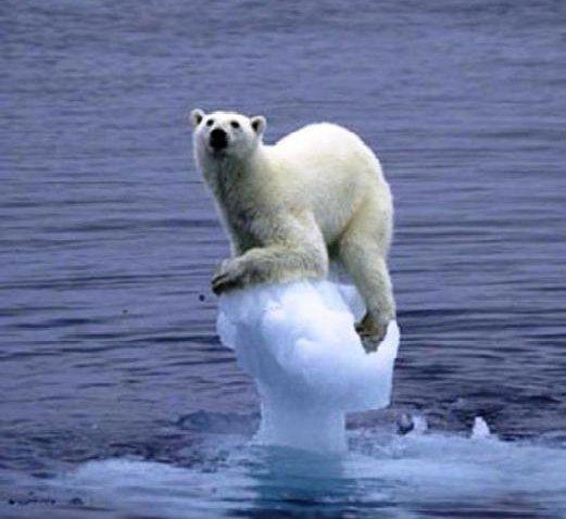 Teken en maak van de Noordpool een permanent beschermd gebied! #savethearctic https://t.co/WJPqjd3mdo https://t.co/uz8juFPr9b