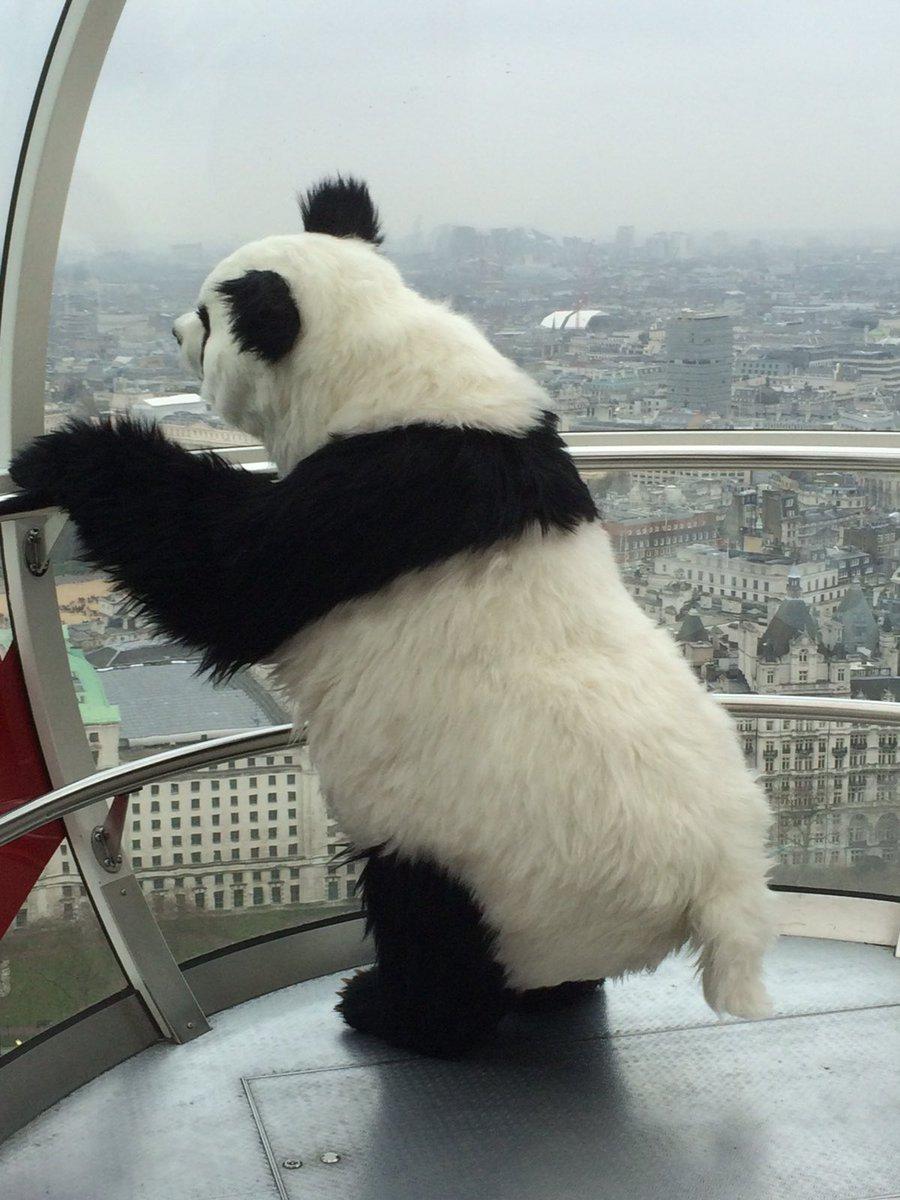 A pandas eye view on @TheLondonEye https://t.co/GN3fnyJngr
