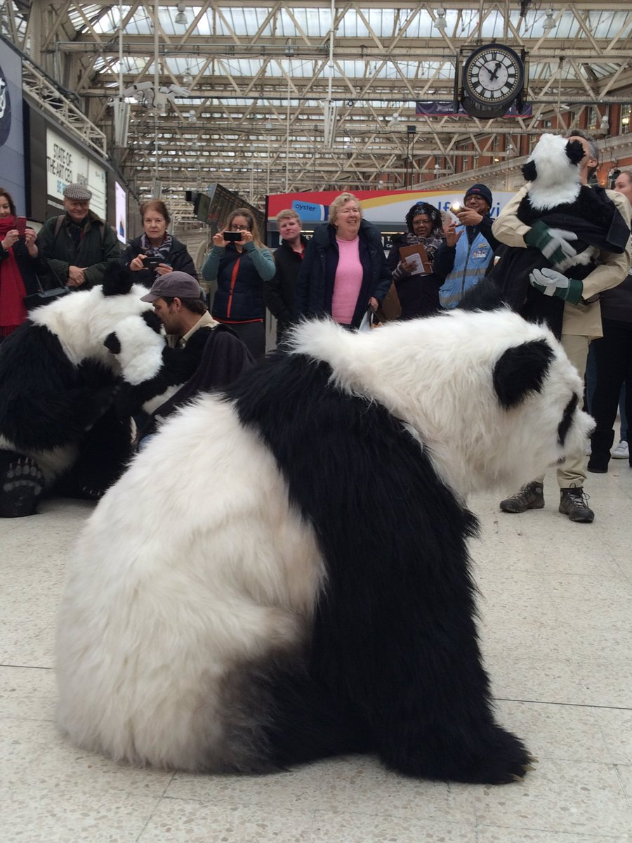 To get home the pandas are preparing for commuters @LondonWaterloo nearly home for the #Pandamonium live show! https://t.co/xEOK7OtIHy