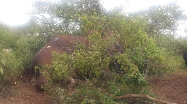 Terrorists of Kajiado [Our lives matter than those of elephants, Kajiado residents protest]