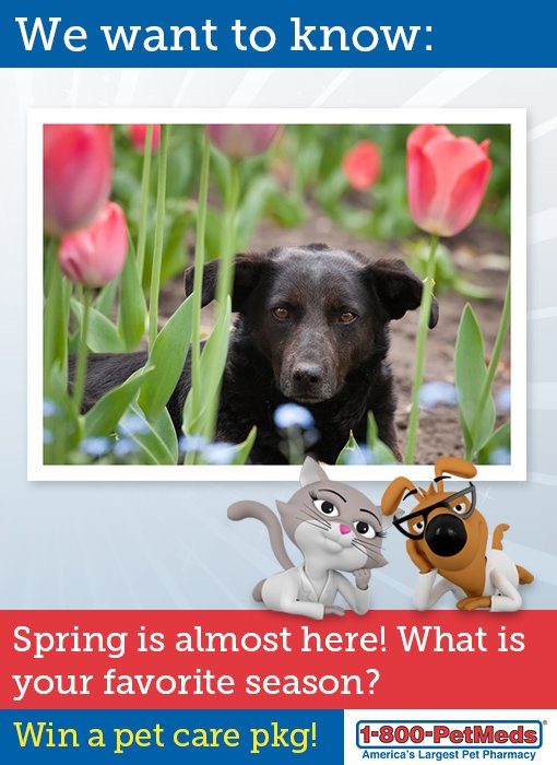 It's almost spring! What's your favorite season? Answer for chance to #WIN a pet care pkg!  https://t.co/kmnEA3SwEZ https://t.co/C5H7s79Nip