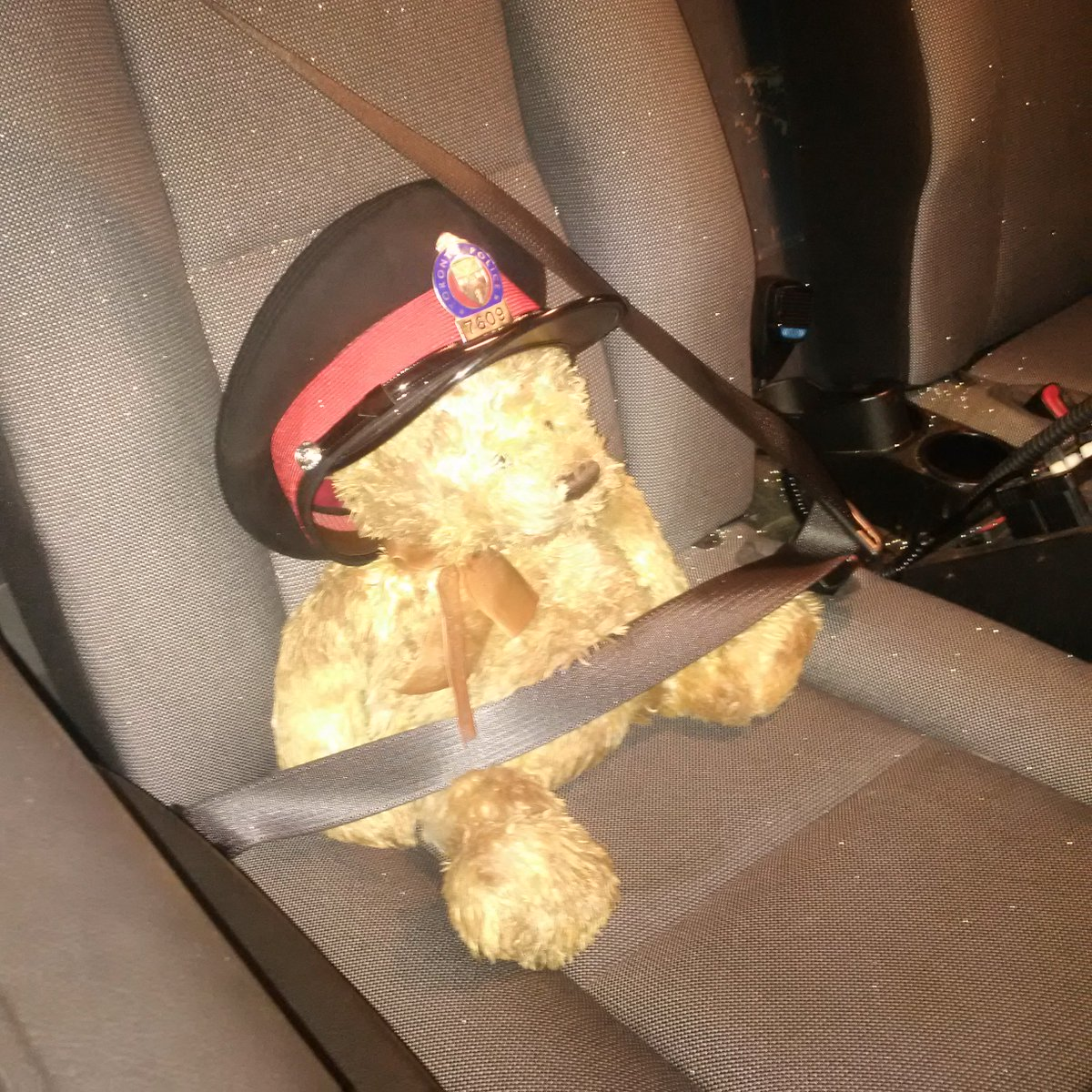 Bear missing human, on way to @BTtoronto with Constable in Training PC Bear @TPSOperations @TorontoPolice https://t.co/w7ChQJRe0J