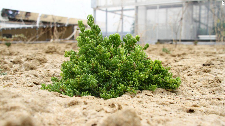 How to grow vegetables in the Sahara -- it's