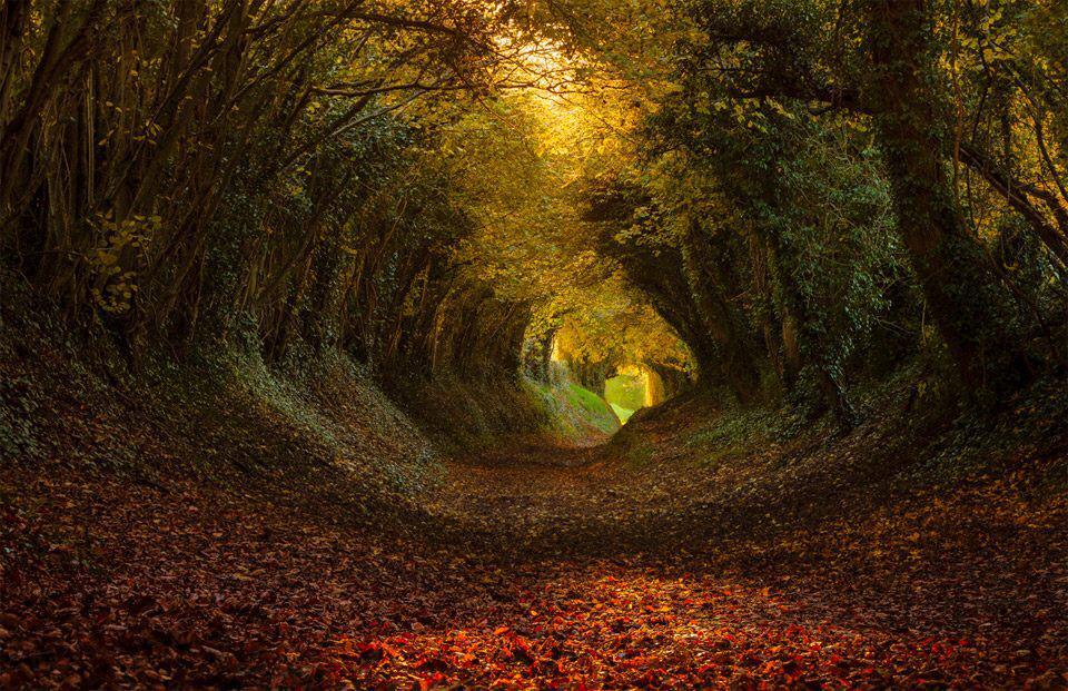 Tunnel of Trees, Halnaker, #England | Photography by ©Finn Hopson https://t.co/5Cs9HDCzUW