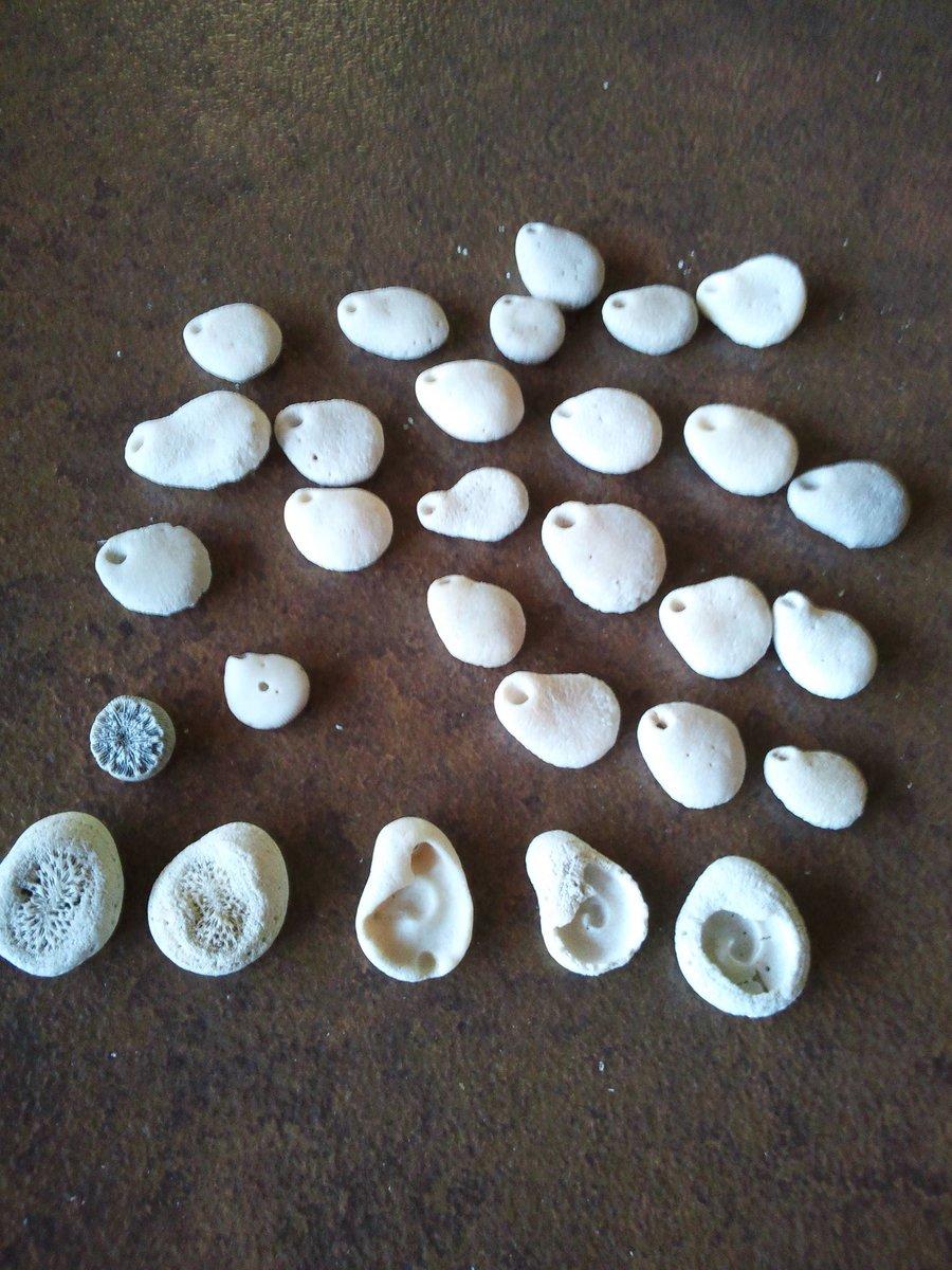鹿児島県指宿の海岸で拾った何かの殻?だと思うのですが、もとはどわな生き物なんだろう。 https://t.co/EdxswPRK1K