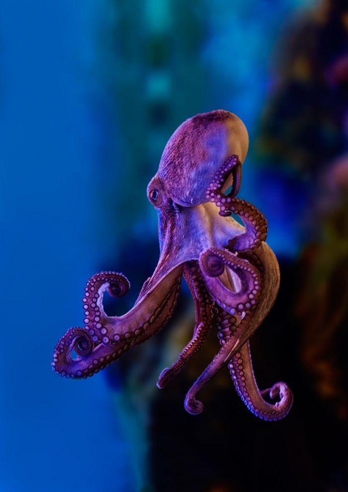 #Photo of the day: Octopus https://t.co/0XT0Dgs6en RT @alemihayvanat