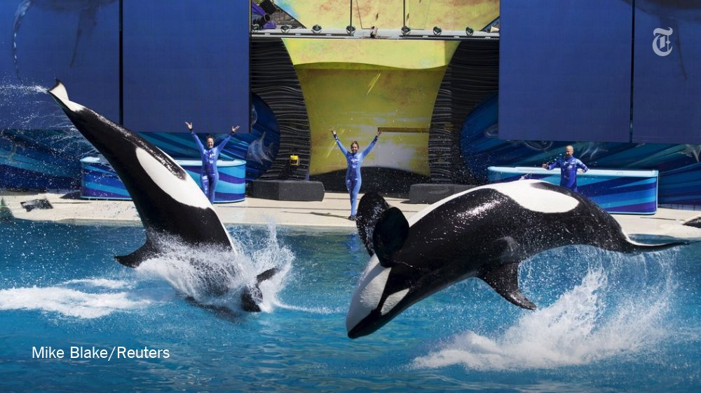 RT @nytimes: SeaWorld said that it would stop breeding killer whales this year https://t.co/mV8cdOG70v https://t.co/YpBPGR60cQ