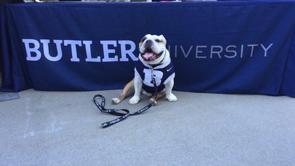 Aww, Butler Blue III! Butler's mascot was not allowed inside the NCAA tournament