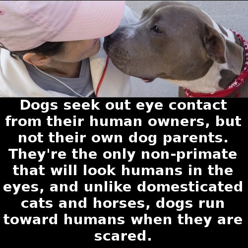 Dogs lovers, have you ever noticed this? https://t.co/zittFk2hip