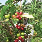 Coffee Farmers Tipped On Value Addition