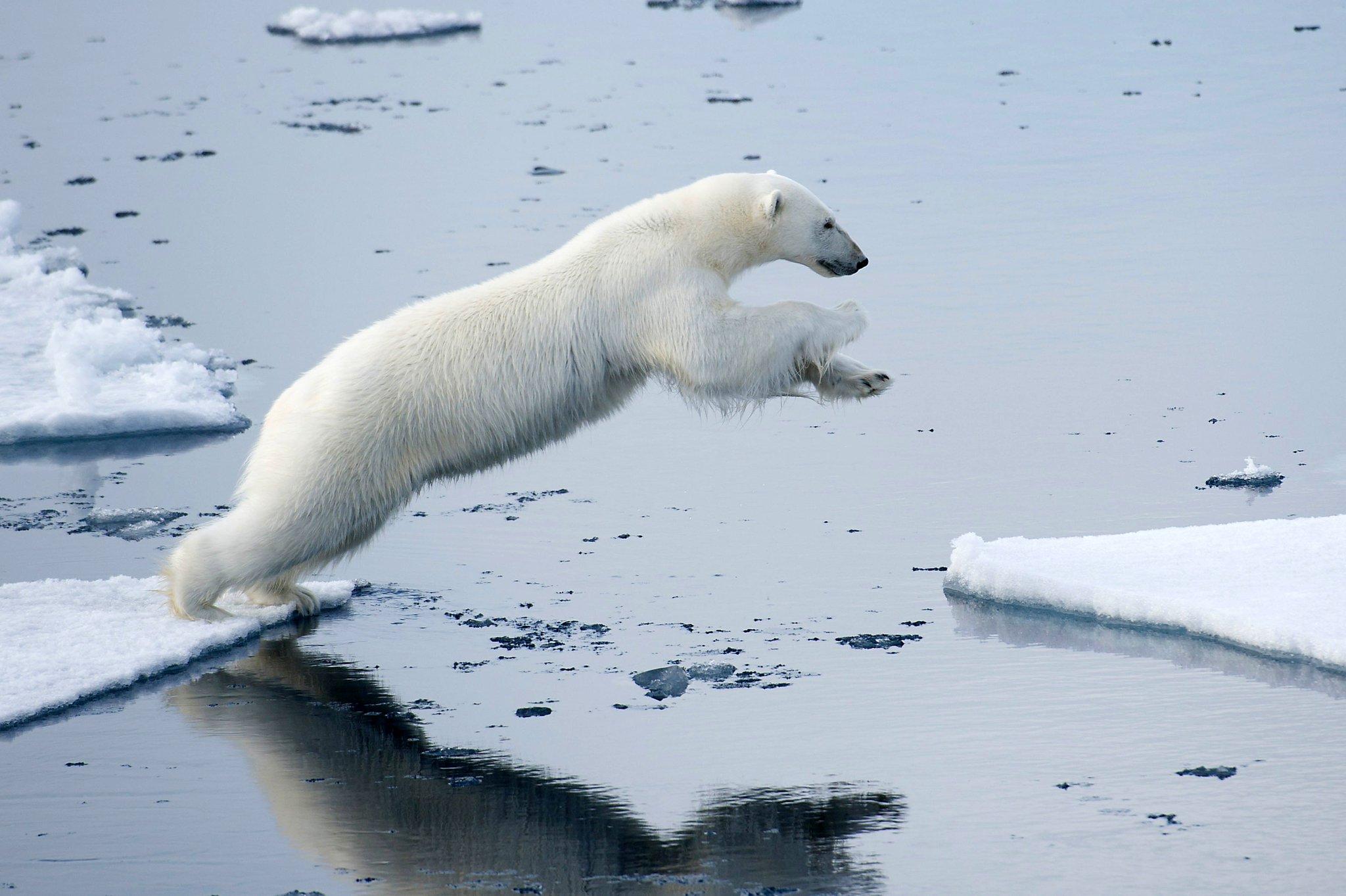 The increasingly melting ice around the Arctic is causing concern for polar bear breeding. (Ariadne Van Zandbergen) https://t.co/ylGVsu8Lfg