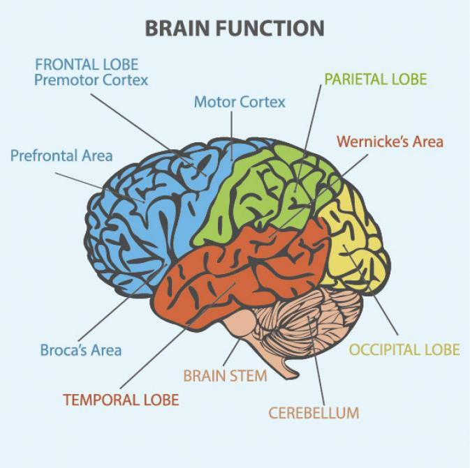 Why Some Types of Brain Damage Cause You to Make Up Words like 'Fripple' @GrammarGirl https://t.co/Go6UBs0Q7G https://t.co/azaYH2jRbT