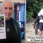"""Citigroup Gives $50K to Chimps Abandoned By #NYBC: """"Situation Not Tolerable"""" https://t.co/I1WspNUwk1 @IBM @jhags https://t.co/MToRjEJVzR"""