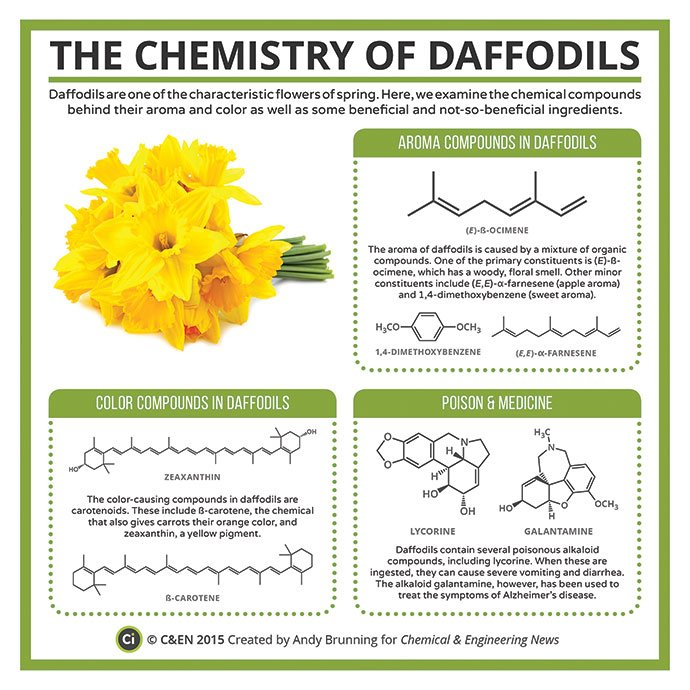 Spring is finally here! The lovely (and poisonous) chemistry of daffodils, by @compoundchem https://t.co/Yf5CE2sphT https://t.co/FdUPJXUkj7