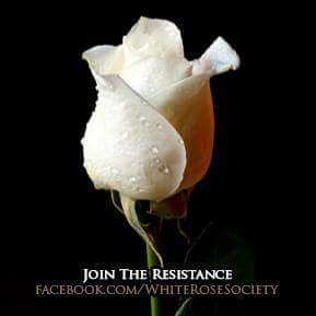 @realDonaldTrump   #WhiteRoseMovement #WhiteRose #opwhiterose #whiterosesociety https://t.co/MMo9tX93la