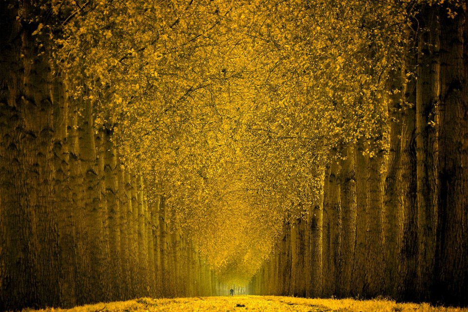 Splendid yellow forest | #Photography by ©Lars Van De Goor https://t.co/5Gh1wol8Cj