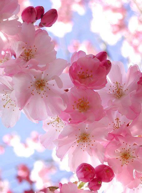 RT @silviadomi22  Lovely! Thank you for sharing  #flower #flowers https://t.co/vm858uDisn