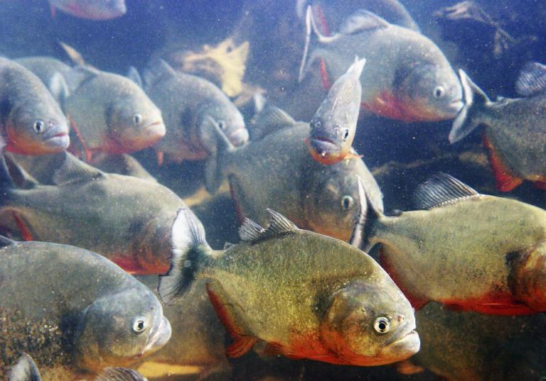 Swimming with an open wound in a pool of Piranhas is #SaferThanATrumpRally. https://t.co/t2uhJ5TG1F