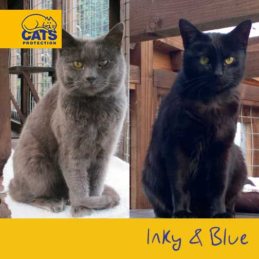 Can you believe Inky & Blue STILL haven't found a home? Please RT! https://t.co/JtdNoYlccv https://t.co/B6zAC0wZLX