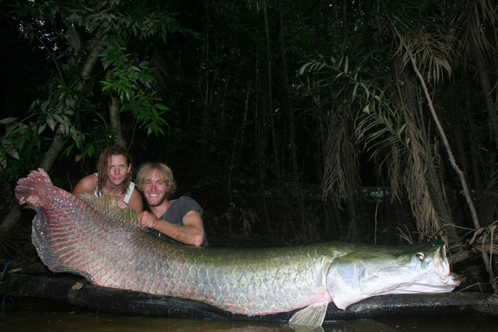 Meet the World's Biggest Freshwater Fish: Pirarucú ! Full Article: https://t.co/7AguggODfU https://t.co/DTI28RvZCR