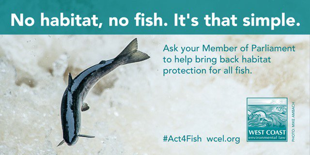 No habitat, no fish. It's that simple. Our new brief Scaling up the Fisheries Act https://t.co/VJvDr3sO2R #Act4Fish https://t.co/rwP8yJGnOa