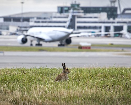 Almost 305,000 passengers are expected to travel through Dublin Airport this Easter Weekend