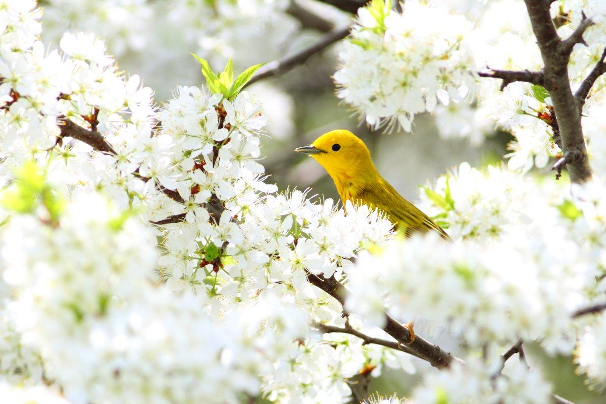 Only 4 days left to vote for ONWR/Magee Marsh as Best Place for Birding @10Best https://t.co/0Rki3Jg8Dg @BSBOBIRD https://t.co/PjXyrdEsI4