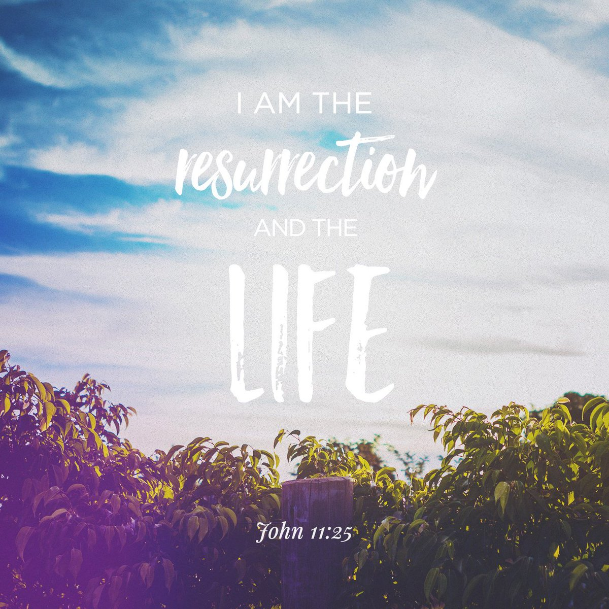 """Jesus said to her,""""I am the resurrection and the life. The one who believes in… https://t.co/esnr5gfYtS https://t.co/DhUMwybzMP"""