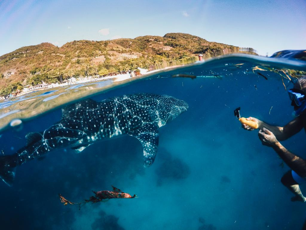 Photo of the Day! Swimming with whale sharks? @caludgero checks that off his bucket list! #GoPro https://t.co/KowDJouLYe