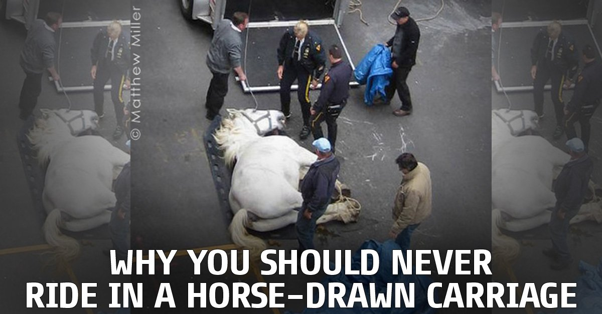RT @peta2: Secrets the horse-drawn carriage industry doesn't want you to know: https://t.co/UOPAoayIHy https://t.co/EPRR9VgBOB