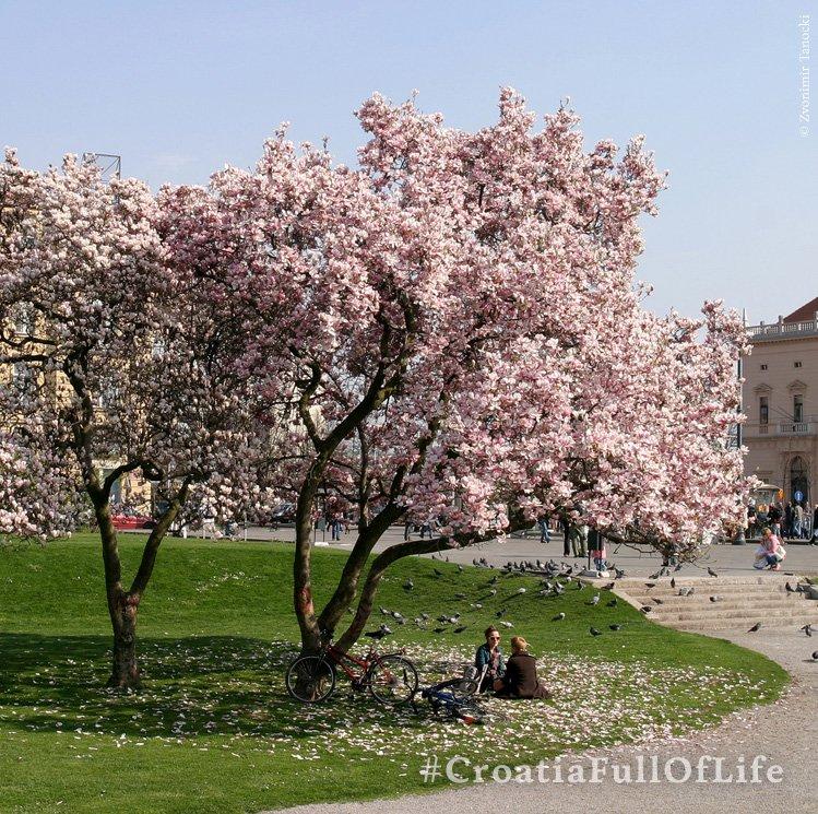 Visit Zagreb during spring and enjoy its wonderful parks!  #CroatiaFullOfLife https://t.co/9TnM8tTfdQ