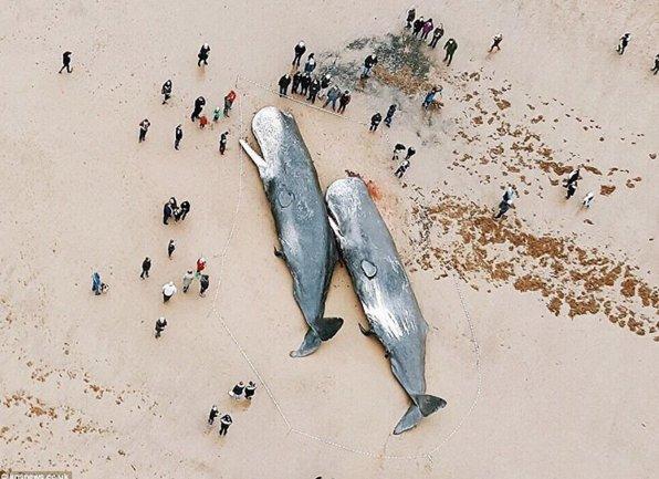 Plastic is poison. https://t.co/KxejhgeY5F via @EcoWatch https://t.co/AtF6RQNINf