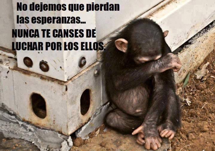 "#OdioQueMeDigan ""solo son animales"" yyyyy?? ellos también sienten, no podemos permitir mas maltrato!! https://t.co/tZGvpnMvAL"