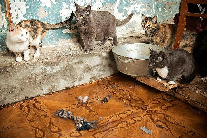 приюты в новосибирске фото