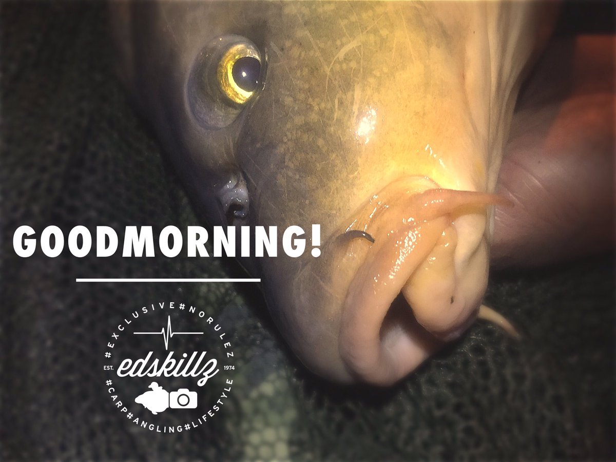 Goodmorning! #goodmorning #fishing #carpfishing #angling #carp https://t.co/PtQ21WltWV