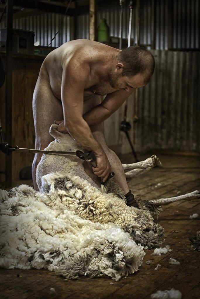 Australian farmers use photo of naked sheep shearer to rebut @PETAUK's anti-wool campaign https://t.co/7wSq9QNv2J https://t.co/zXokWYqhVY