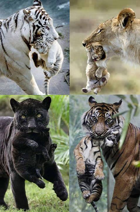 Motherhood in nature: https://t.co/fpHwxvYWUm