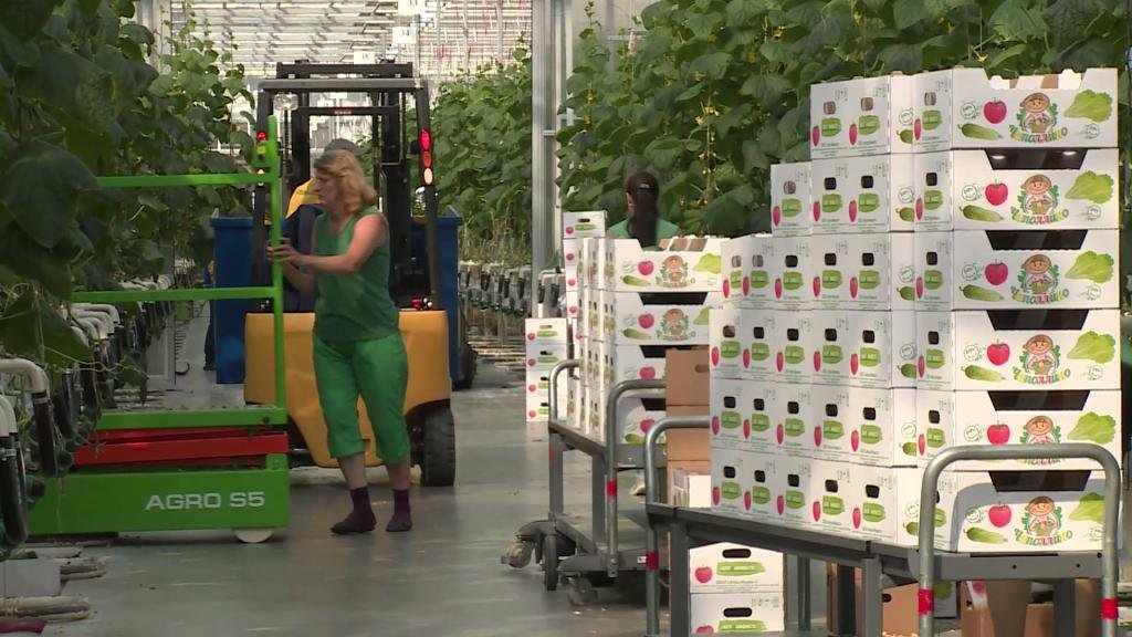 FOCUS - Can Russian agriculture benefit from the embargo on Western products?