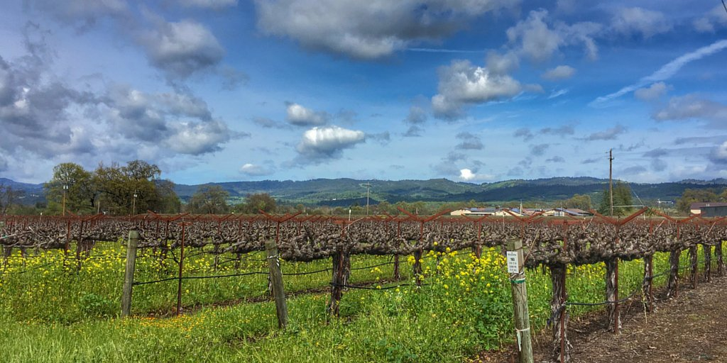 It's a beautiful place to call home. #NapaValley https://t.co/GnfxVxjU4H