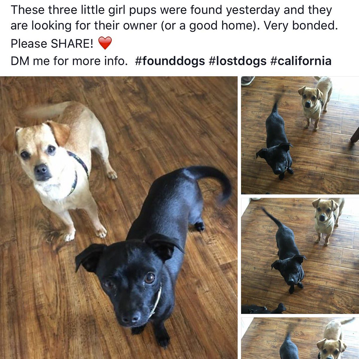 Can you help us find our owner? We got lost and ended up in the road.  Dm for more info. Please RT! #rescue https://t.co/fMeFZ18Ur5