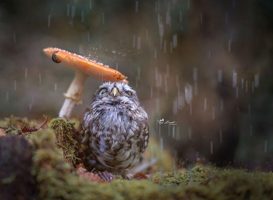 Tiny Owl Taking Shelter From the Rain Under a Mushroom https://t.co/pfv6CvOFV1