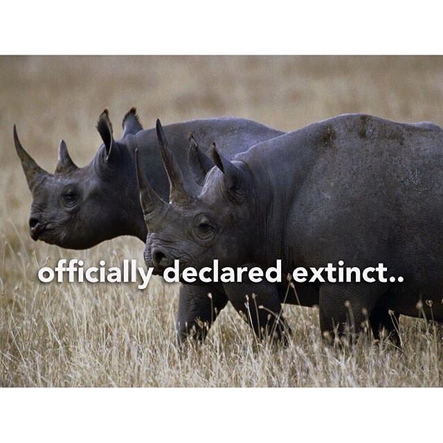 The rarest of the black rhino subspecies are now extinct. Stop destroying these beautiful creatures.