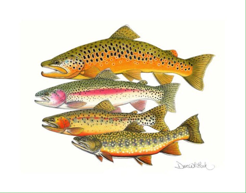tonight on #FishChat Lets talk about Fish Art. Do u have any? want any? do u care? Dave Whitlock just did this https://t.co/bJZtXV4JLl